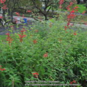 Location: My garden in N E Pa. Date: 2011-10-04