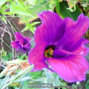 Location: my garden Date: 2015-09-01