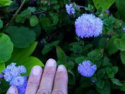 Thumb of 2015-09-30/Plantiful/0cee01