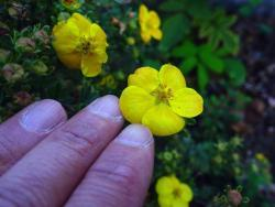 Thumb of 2015-09-30/Plantiful/ea6590