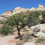Location: Capitol Reef, UtahDate: 2015-09-20