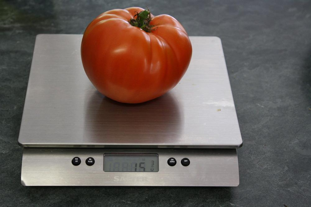 Photo of Tomato (Solanum lycopersicum 'Country Taste') uploaded by Weedwhacker