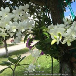 Thumb of 2015-10-04/GigiPlumeria/5ceded