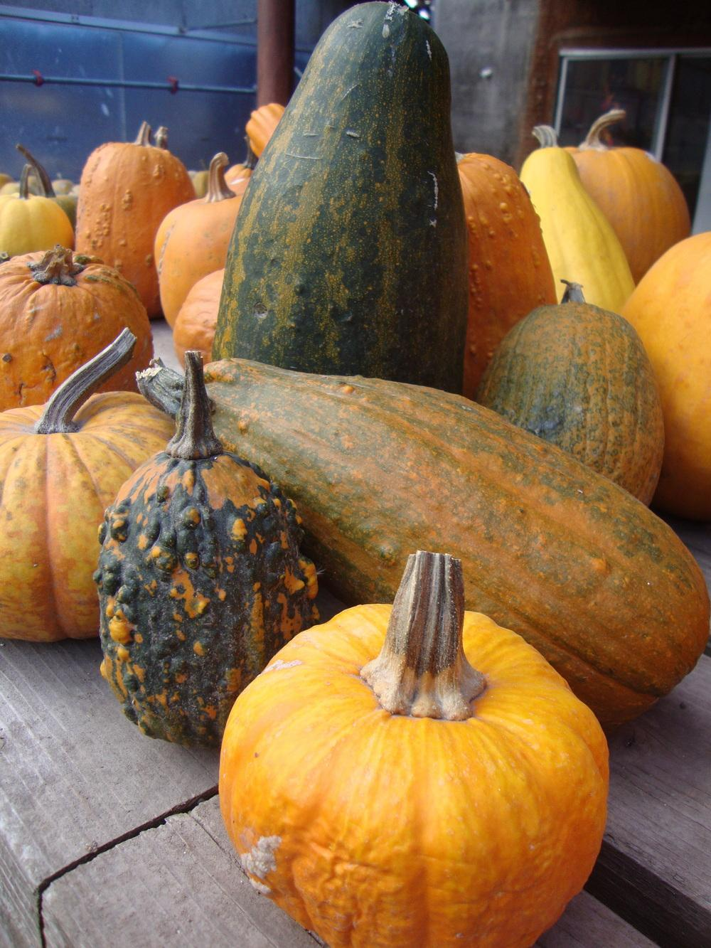 Photo of Gourds, Squashes and Pumpkins (Cucurbita) uploaded by Paul2032