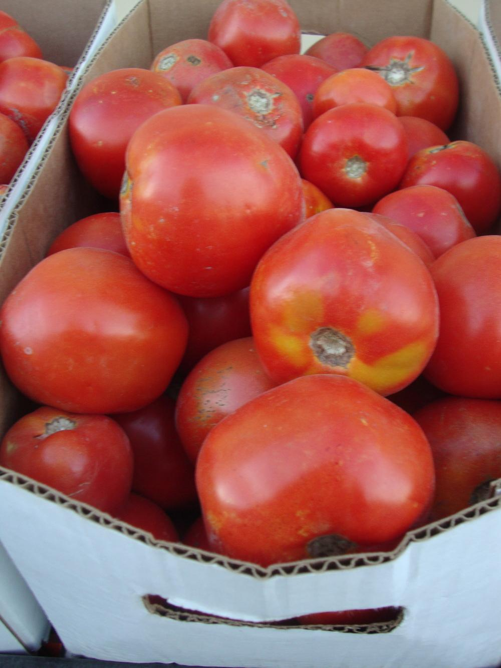 Photo of Tomatoes (Solanum lycopersicum) uploaded by Paul2032