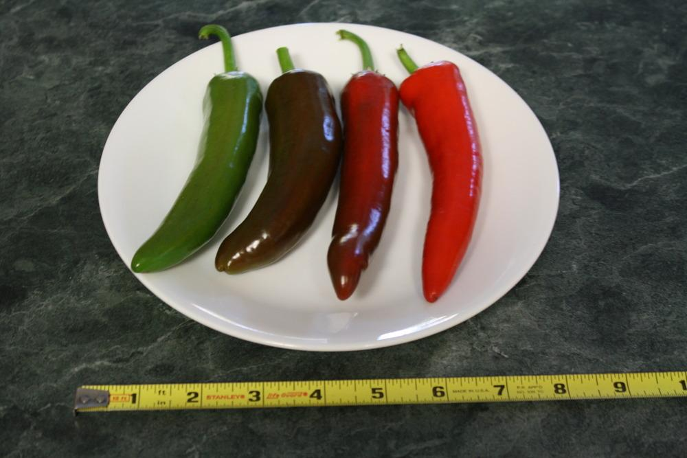 Photo of Hot Pepper (Capsicum annuum 'Guajillo') uploaded by Weedwhacker