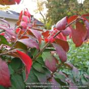 Location: West borderDate: 2015-10-21Leaves starting to turn red
