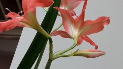 Thumb of 2015-11-01/DogsNDaylilies/d1bb20