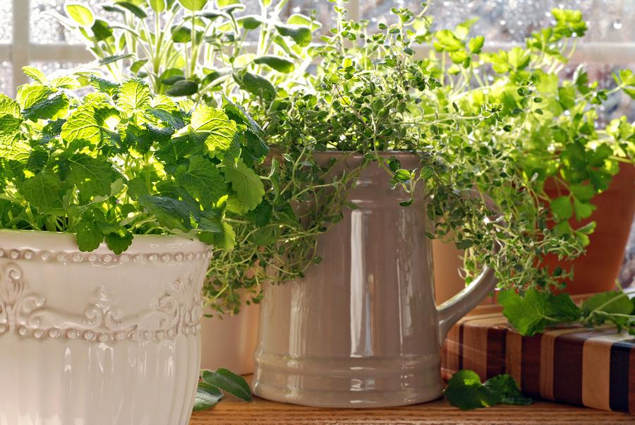 Creating an indoor herb garden during the winter season for Indoor gardening during winter