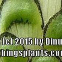 Thumb of 2015-11-21/Dinu/b9371a