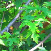 Location: central IllinoisDate: 2011-09-28Who's peeking out?