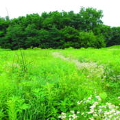 Location: Toolesboro Indian Mounds, IowaDate: 2011-07-03