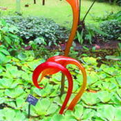 Location: Missouri Botanical Garden (MOBOT) - St LouisDate: 2-25-13w/ some Chihuly glasswork