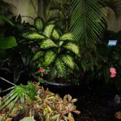 Location: central Illinois-Washington Park Botanical Garden -Springfield, Il.Date: 2015-12-05Plant in the middle.