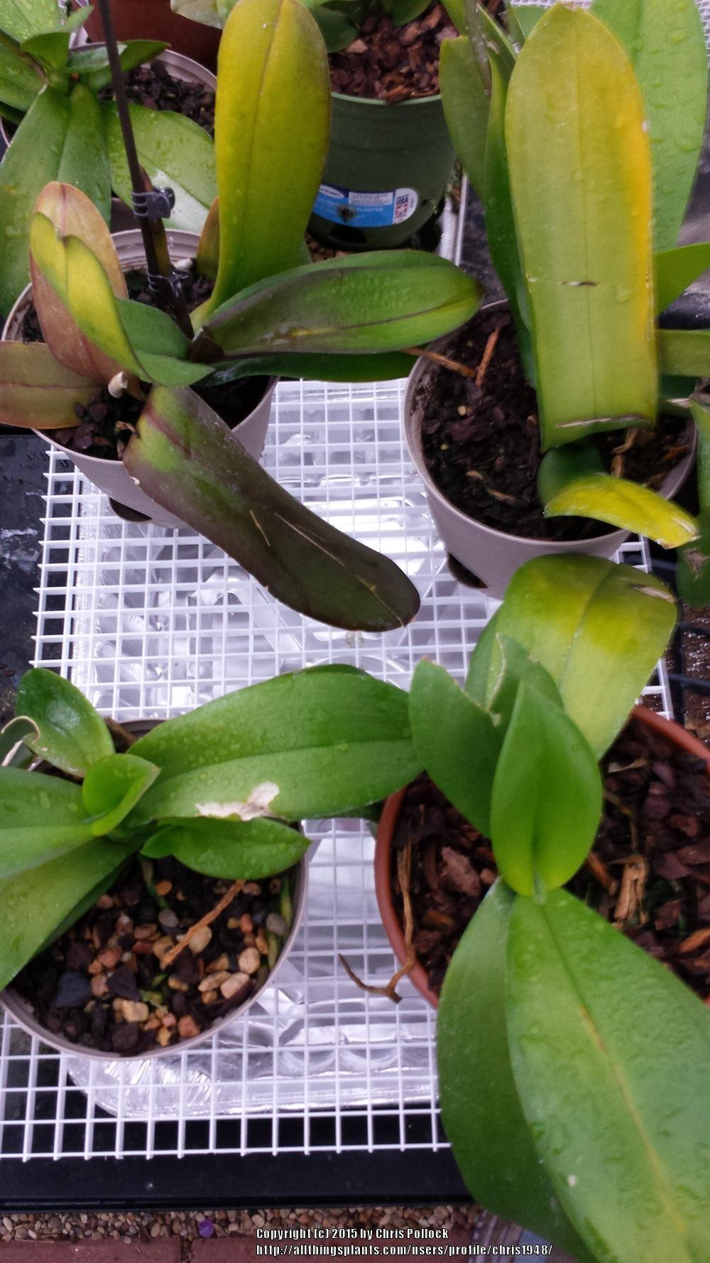Homemade Humidity Trays For Multiple Orchids Upgrade