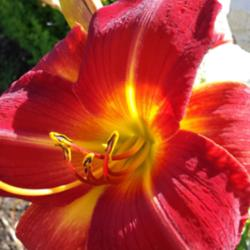 Thumb of 2015-12-16/DogsNDaylilies/a9bb27