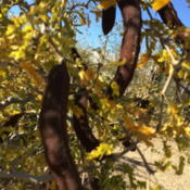 Location: Summerwinds nursery Scottsdale, ArizonaDate: 2016-01-02