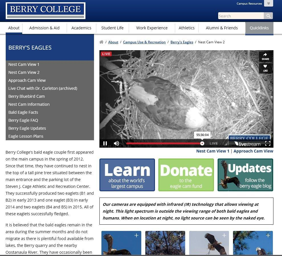 Sandbox forum: Berry College Eagle Cam Is Up Again