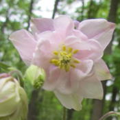 Location: Lucketts, Loudoun County, VirginiaDate: 2013-05-06View of flower interior
