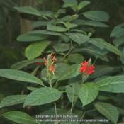 Location: Atlantic Forest, Paraty, SE BrazilDate: 2014-02-03