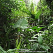 Location: Atlantic Forest, Paraty, SE BrazilDate: 2014-01-04