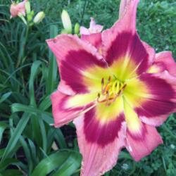 Thumb of 2016-03-04/taylordaylily/411893