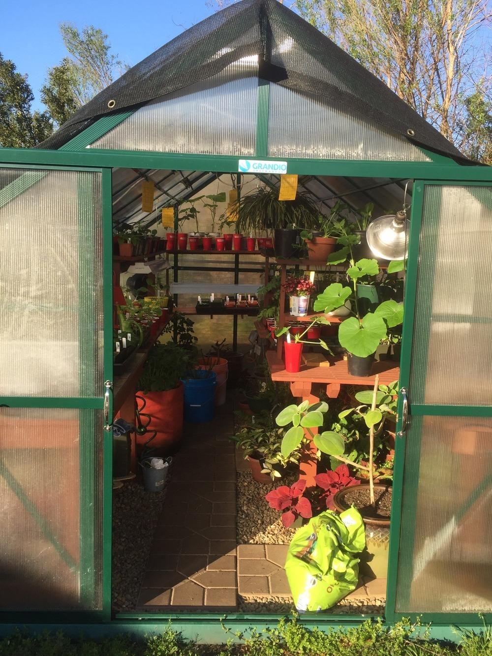 Greenhouses forum: My Greenhouse - Charleston - Garden.org