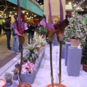 Location: Philadelphia Flower ShowDate: 2016-03-07exhibit