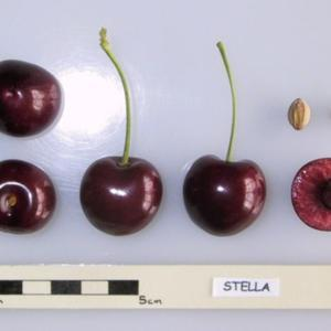 UK National Fruit Collection photo
