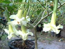 Thumb of 2016-03-22/AwesomeBlossomPlants/948c25