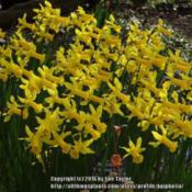 Location: RHS Harlow Carr, Yorkshire, UKDate: 2016-03-22