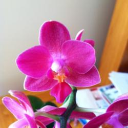 Preventing Premature Orchid Bloom Drop