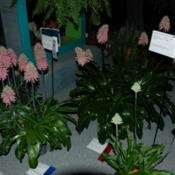 Location: Phildelphia Flower Show 2013Date: 2013-03-02
