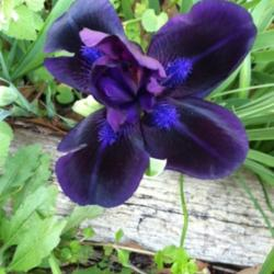Thumb of 2016-04-10/grannysgarden/192618
