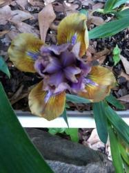 Thumb of 2016-04-10/grannysgarden/870515
