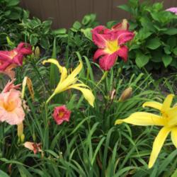 Thumb of 2016-04-13/taylordaylily/fe1a29