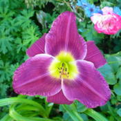 Location: Nora's Garden - Castlegar BCDate: 2015-07-18 10:00 am.  Exotic