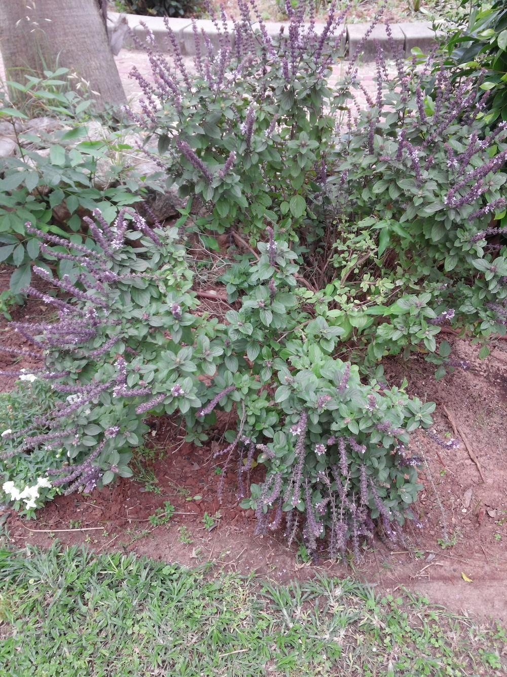 Plant ID forum Please help to identify this plant