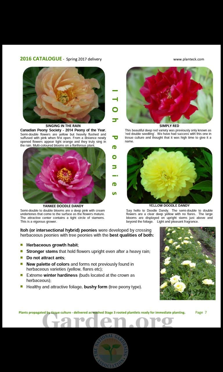 peonies forum is there any interest out there for a group buy of
