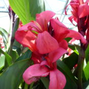 "Location: Lutz, FLDate: 2016-04-28For sale at Lowe's as ""Tropical Series"" but did not spe"