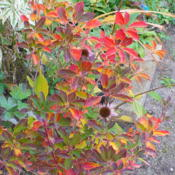 Location: Nora's Garden - Castlegar BCDate: 2012-10-15 5:13 pm. An added bonus to have such a variety of colours in fal