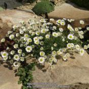Location: RHS Harlow Carr alpine house, Yorkshire, UKDate: 2016-05-12