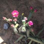 Location: Scottsdale AZ my yardDate: 2015-04-21