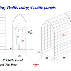 Climbing Trellis Using 4 Cattle Panels