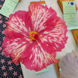 Hibiscus Forum Sunset Chapter American Hibiscus Society Show And