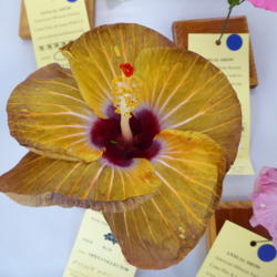 Photo of Tropical Hibiscus (Hibiscus rosa-sinensis 'Mother Nature')