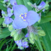 Location: Indiana  zone 5Date: 2015-06-30