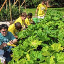 National Garden Bureau Accepting Applications for Therapeutic Garden Grants