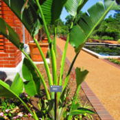 Location: Missouri Botanical Garden (Mobot) in St LouisDate: 2016-06-18
