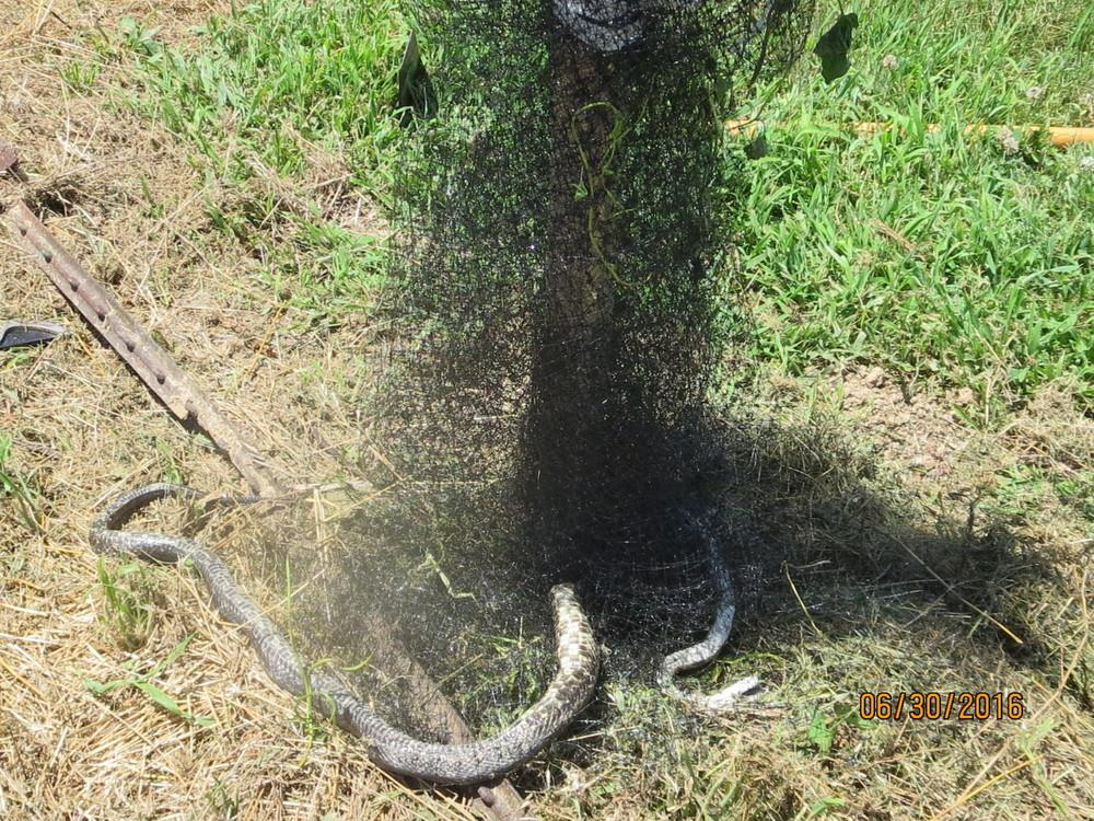 Bird netting to stop snakes